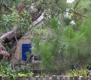 Hyacinth's house